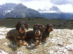 3 Dackel in Südtirol Mai 2015